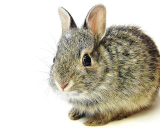 Tularemia Infects Mesa County Woman