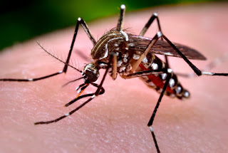 The 411 on Zika virus