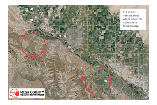 Rabbit from area southwest of Fruita tests positive for tularemia