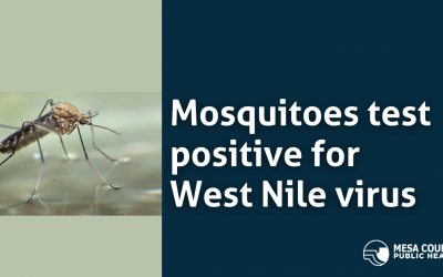 Mosquitoes Test Positive for West Nile Virus